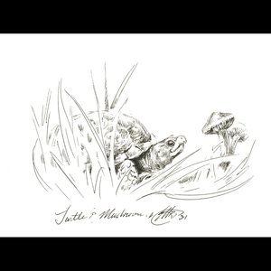 Original Art Turtle mushrooms ink studio sketch